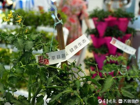 瓜果飘香,生鲜水果蔬菜植株也搬上了文博会!