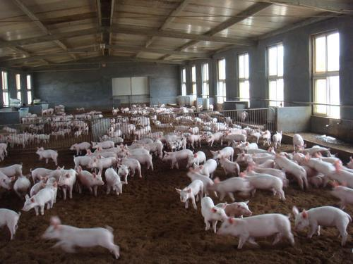 不算不知道 我们消费高价猪肉已经一年了插图(1)