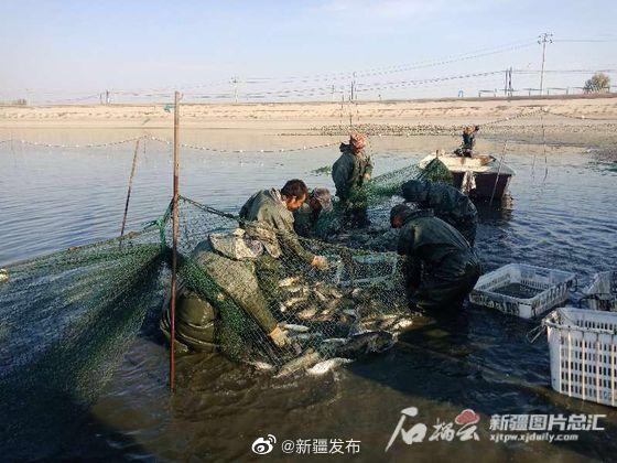 昌吉市柳工镇十三村鱼满堂玉米香