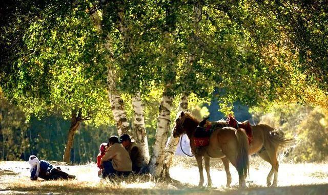 乱欲第73部分阅读南方人眼中的坝上草原,被夕阳包裹着的牧群,风景怡人温馨