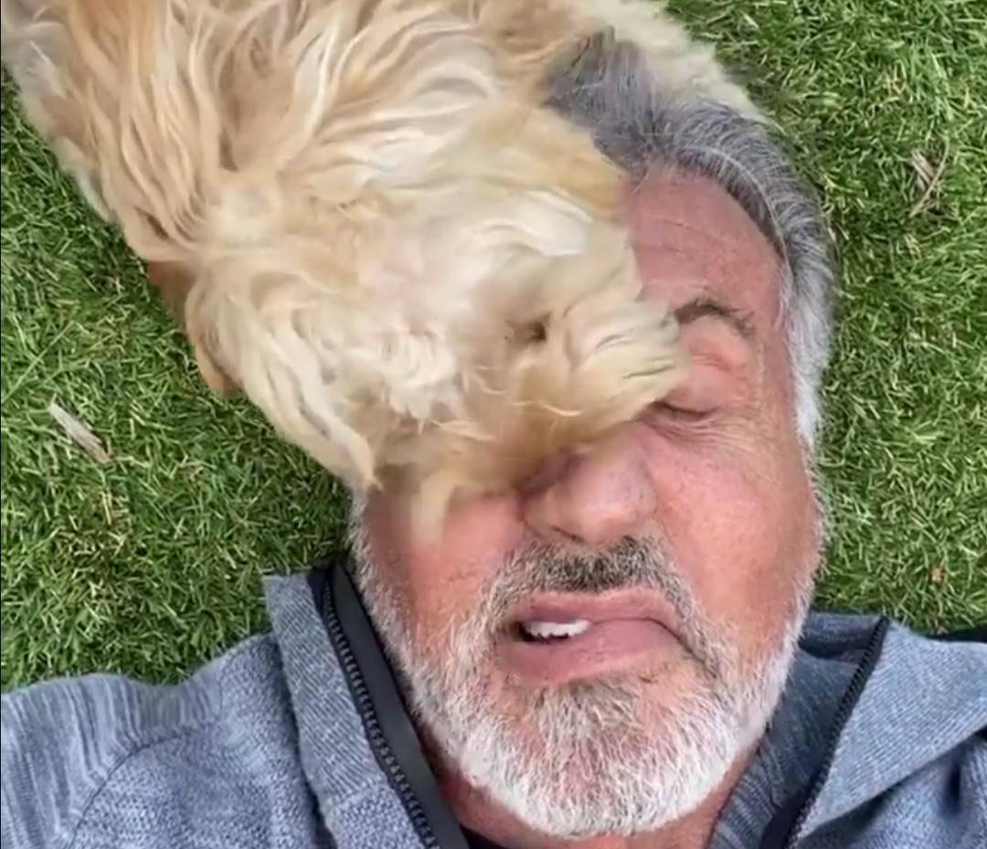 73岁史泰龙近况曝光,须发皆白,昔日硬汉现在已经老态龙钟