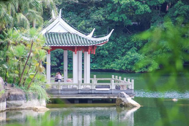 厦门网红打卡地 隐藏着一个热带雨林 仙气十足