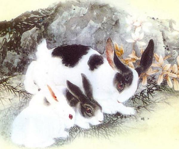屬兔人天命不凡,若兔人出生在這幾月,下半年將有「大事」!
