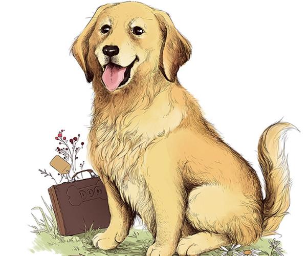 """生肖狗:""""运势大轮回""""?5月有一生的""""喜事"""",关乎属狗人一生"""