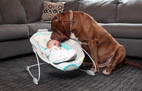 在家狗也不安全?外国小哥晕到时,居然被自己家宠物狗咬死