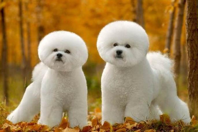 夏天到了,不想帮狗狗清扫狗毛?那就养这4四种狗吧