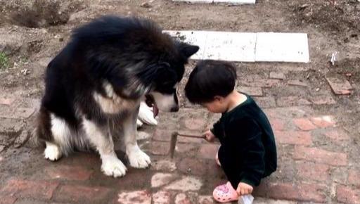 90斤的大狗,一巴掌拍在了小主人的头上,妈妈在一旁哈哈大笑