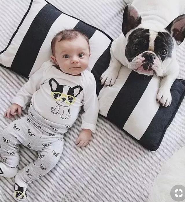 你知道养宠物又生娃的后果,有多严重么?