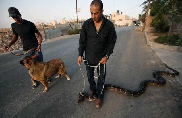 外国小伙养了一只很听话的宠物,为何其他宠物看到了它都纷纷走掉