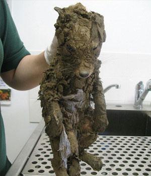 女子在泥潭里发现一只流浪狗,将狗狗洗干净后,顿时不淡定啦