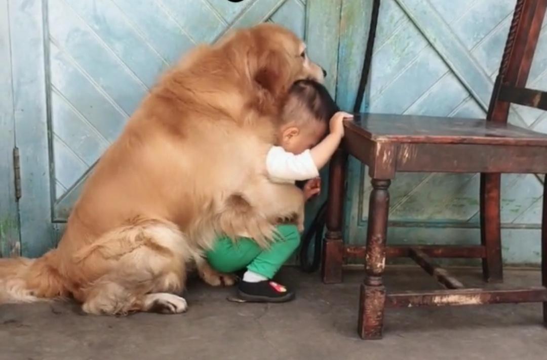 父亲因为孩子调皮准备教训一下,宠物狗狗的表现,让人感动