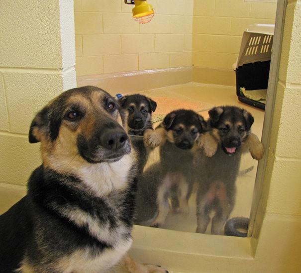 二哈一次这么多怎么顾的了?请看「当狗妈好难」的有趣育儿照!