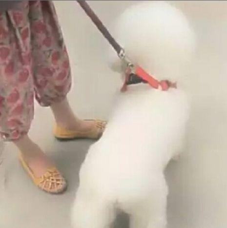 女人带宠物狗出去散步,行人看到女人就笑,女人低头一看发现原因