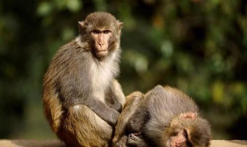 """农村俗语说""""打狗还得看主人"""",又说""""杀鸡给猴看""""到底听哪个"""