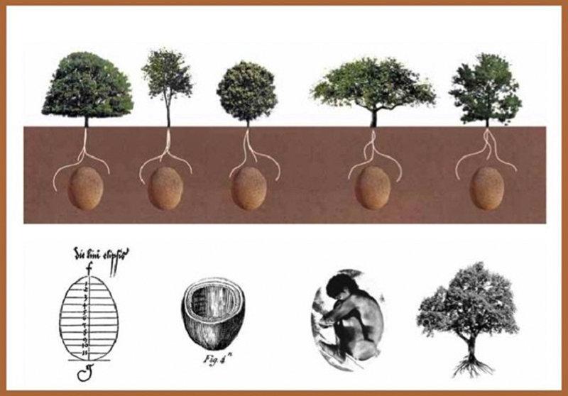 新型生态殡葬:人体蛋形胶囊,死后变成一棵树