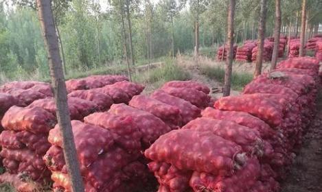 《【无极2娱乐测速登录】卖不动的何止大蒜,亩产可达1万斤,但农民依然亏本,咋回事?》