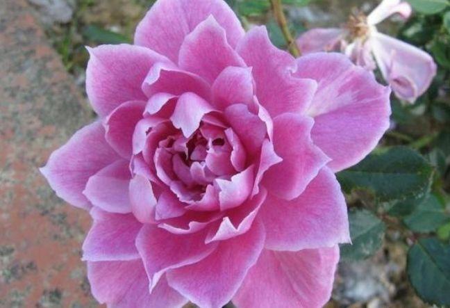 此花表达相遇是一种宿命,让我们诉不尽的浪漫情怀,让人深深向往