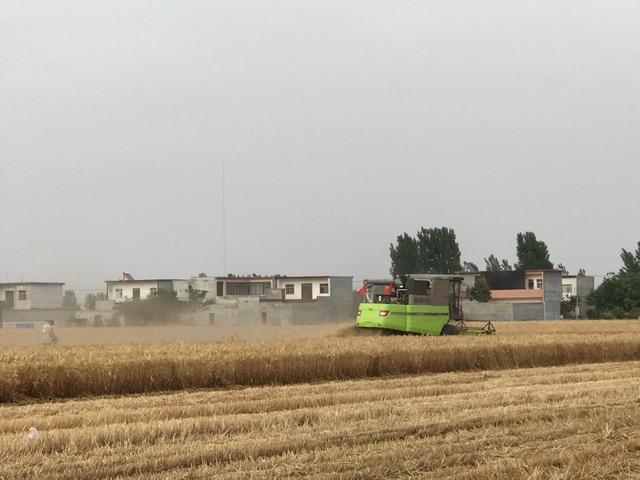 《【无极2手机版登录】全国主产区麦收过六成 产粮大省河南布置小麦托市收购工作》