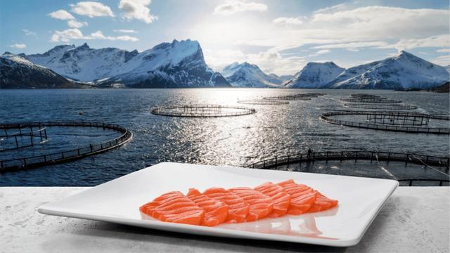 《【万和城公司】欧洲主要三文鱼供应商股价下跌,对员工进行检测,无人患新冠肺炎》