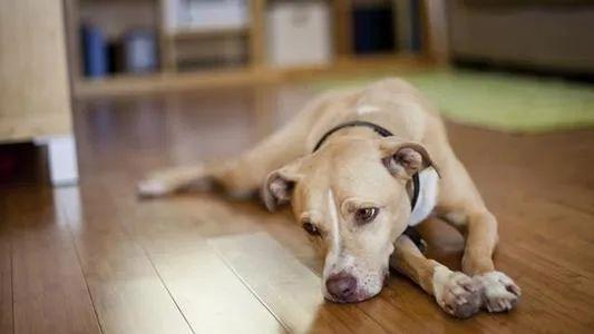 鄭爽想帶自家狗去寵物店磨牙,原因簡直太奇葩了!