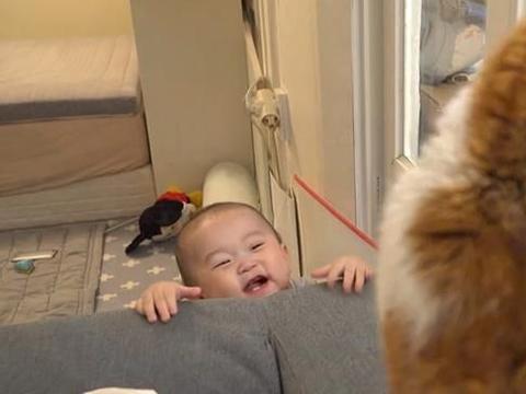 """孕期养猫容易感染""""弓形虫""""?关于宠物对孩子的这些危害,可信吗"""