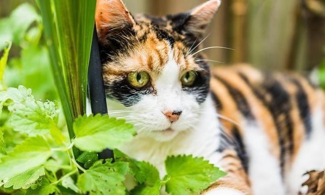 宠物驱虫很重要,小心四种寄生虫,危及家人健康