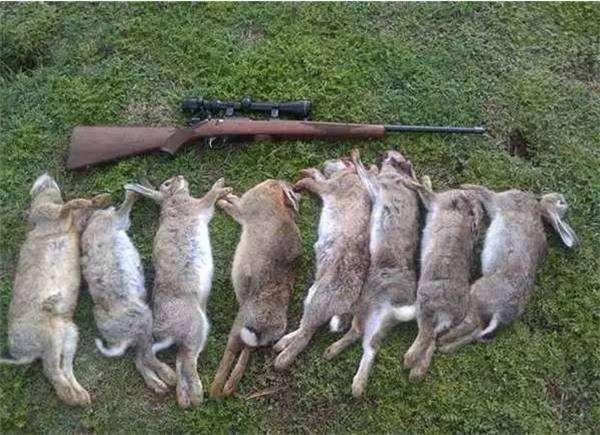 19世纪澳大利亚从24只暴增到100亿只野兔的故事