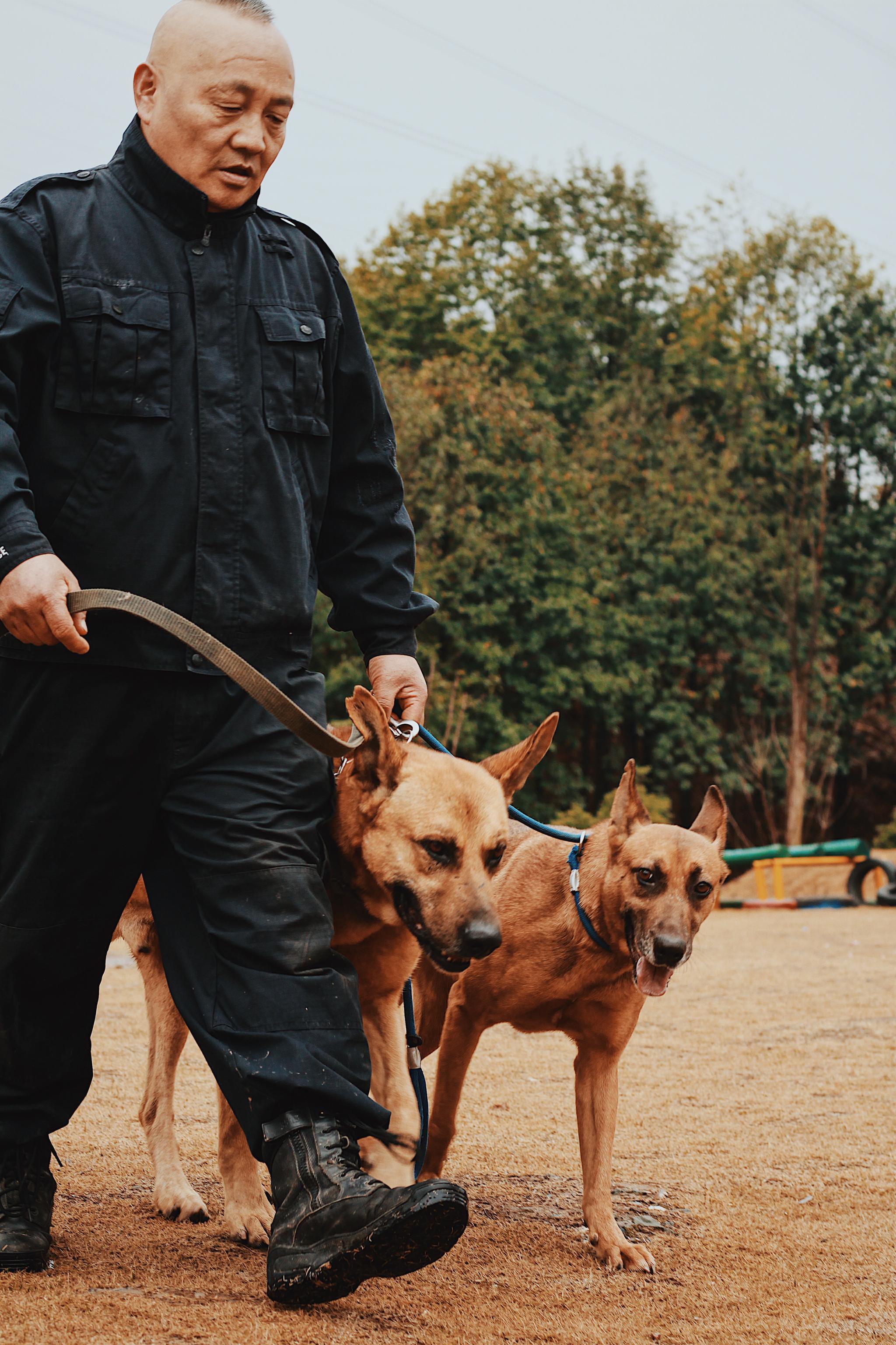 警犬年轻时协助他破案,年迈时需要他照顾,白雁觉得退役的警犬就像家里的老人一样。