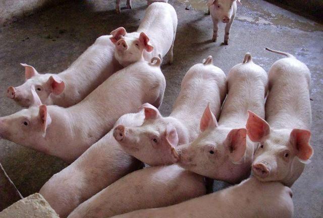 《【无极2娱乐登录地址】2020年7月22日全国生猪价格综述:继续大范围下跌!》