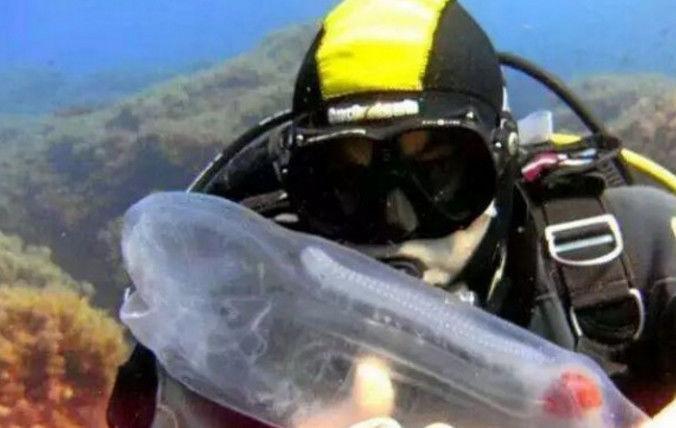 男子在深海潜水时发现一个透明塑料瓶,游近一看顿时傻掉了