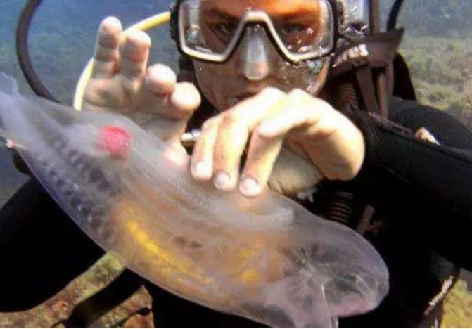 男子在深海潜水时找到一个半透明塑料瓶,游近一看顿时傻丢弃了