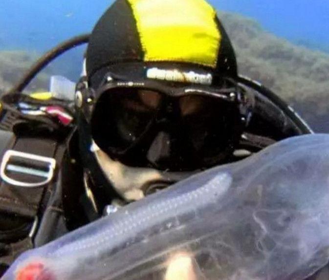 男子在深海潜水时找到一个透明塑料瓶,游近一看顿时傻掉了