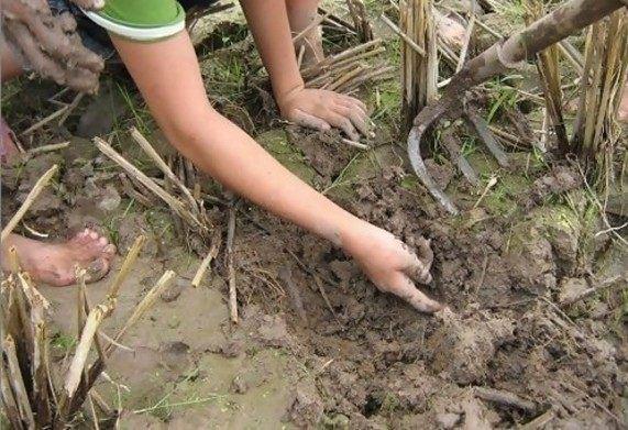"""农村孩子去田里挖泥鳅, 一不留神翻出了一只""""宝贝"""", 回家卖钱"""