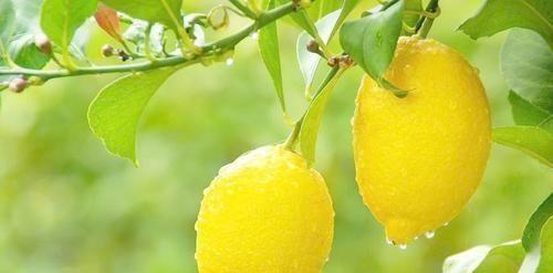 """有人建议女性应该把柠檬当作""""宝贝"""",他不仅可以用作饮料"""
