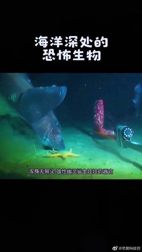 生物 恐怖 症 海洋