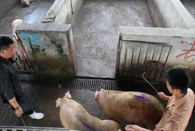 《【无极2测速登录】3个月猪肉每公斤涨10.25元,涨价近3成,秋季猪肉价格还会涨吗?》