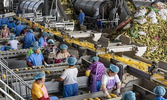 《【无极2官方登陆】猪肉价格高涨,农民迎来收入高峰期,这些方面更突出!》