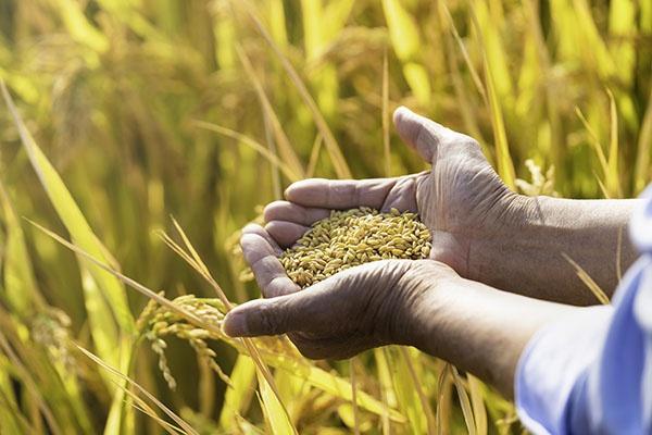 分析物联网下智慧农业的主要功能