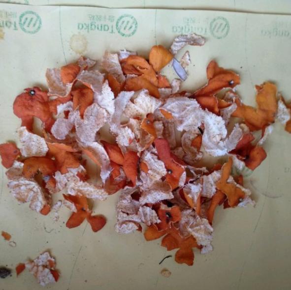 """3种家庭垃圾,被称为""""养花宝贝"""",盆里扔一些,花卉爆盆不停"""