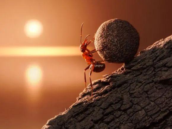 疯狂的蚂蚁战略配售基金:每秒8人购买 银行销售渠道面临颠覆