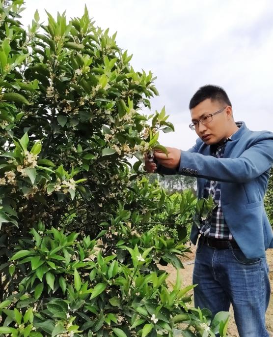 刘沈厅检查果树。受访者供图。