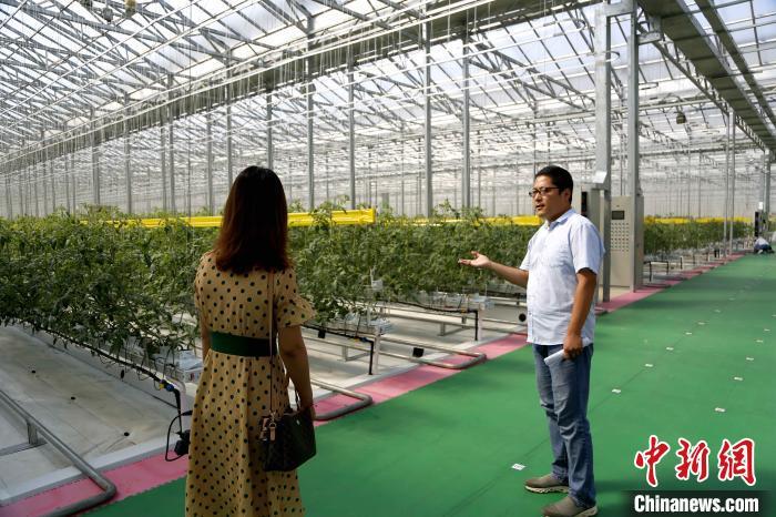 """工作人员向记者介绍""""中国寿光型""""智能玻璃温室采用的先进科技。沙见龙 摄"""