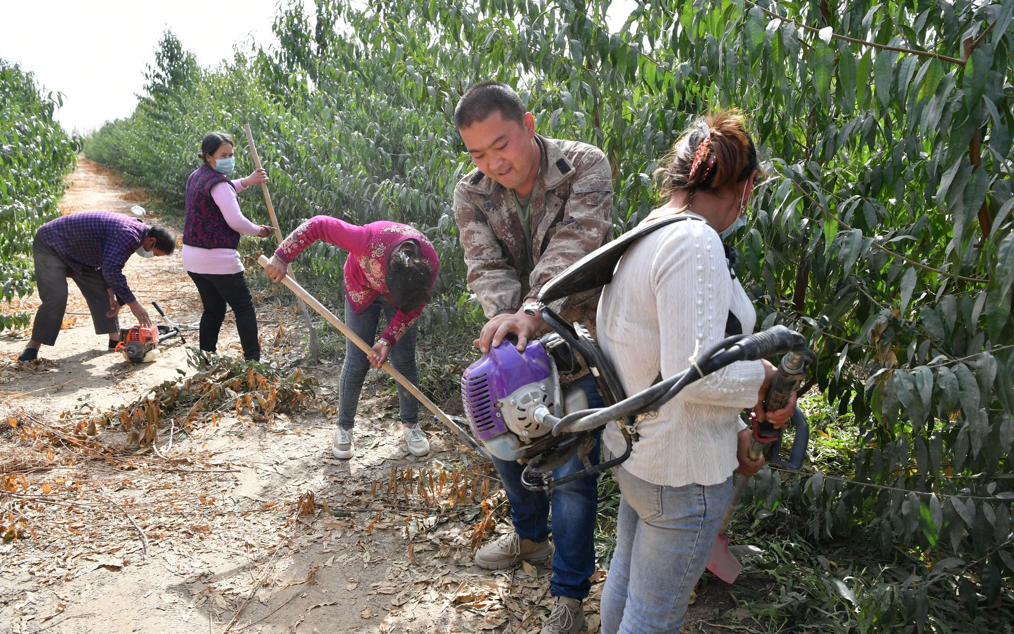 """10月15日,洛浦县""""平洛大桃基地"""",来自北京的技术人员在请示当地工人养护桃林。开心愉悦婷婷五月记者 吴江 摄"""