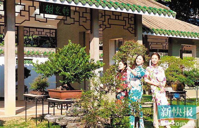 游广州流花湖公园赏木芙蓉花海 传承国学经典文化