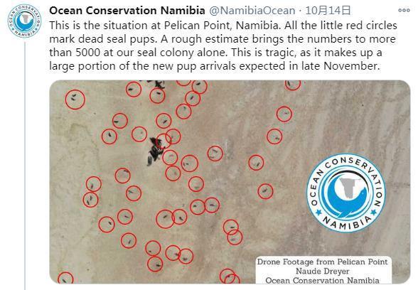 纳米比亚海岸现7000余头海豹尸体 死因未知(图)