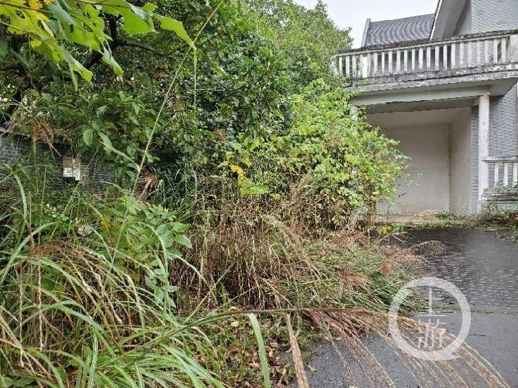 10月26日,长沙同升湖山庄一栋临湖别墅内,杂草丛生,不见人影。/记者 肖鹏