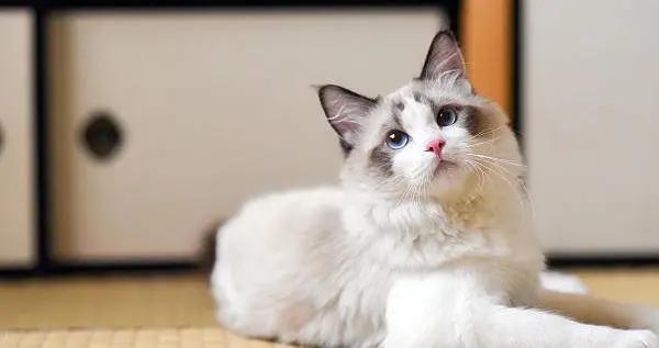 不养猫,其实也有感染弓形虫可能