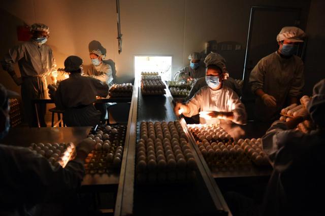 一盘盘鸡蛋如何生产出疫苗?探秘北京流感疫苗生产线