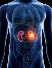 体检查出蛋白尿,一定是肾脏的毛病?