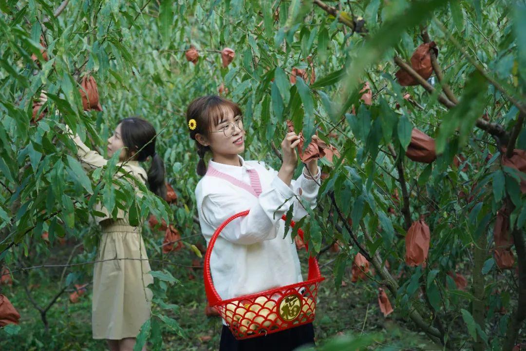 10月13日,在南昌市太平镇世外桃源扶贫种植基地,游客正采摘冬桃。新华社发